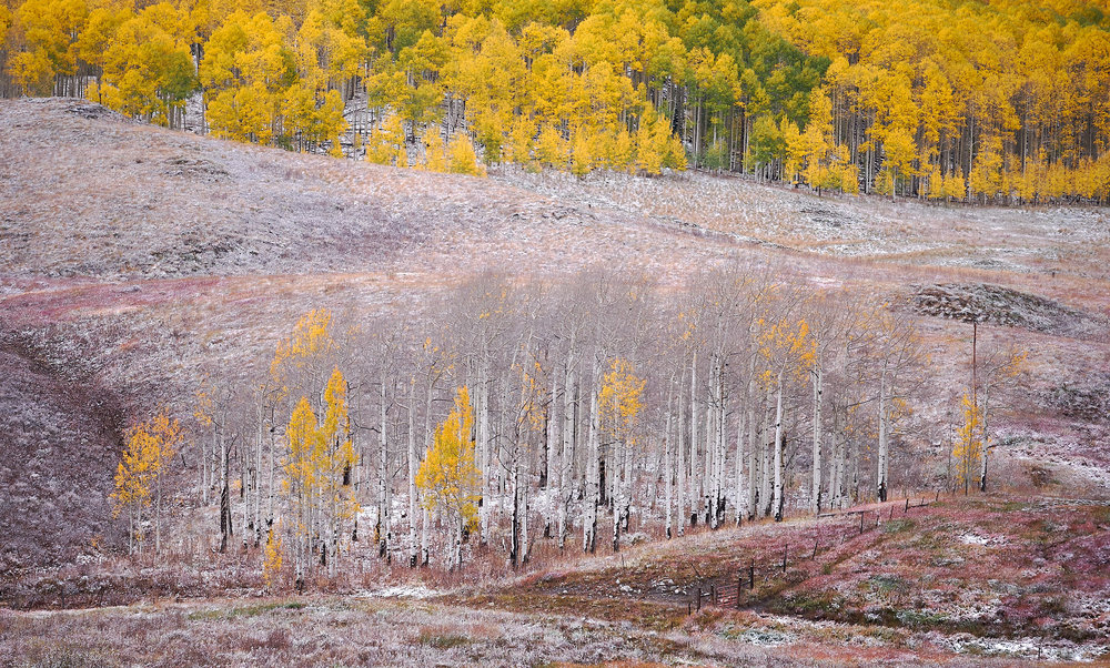 David Kingham - Fujifilm 100-400 @ 124mm (Equivalent focal length of 186mm), ISO 800, f/8, 1/150s Composition - Use of zig-zag curving lines to create movement and depth, along with the literal contrast of life/death with the few remaining leaves on the aspen trees.