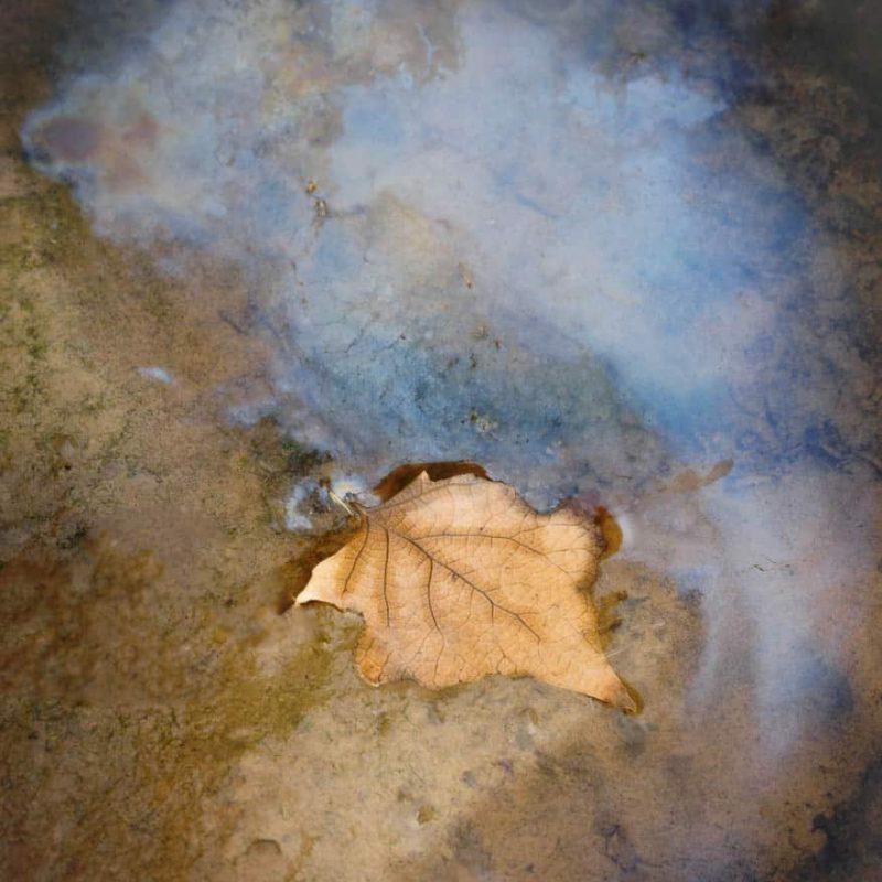 A fallen leaf created a blue pool of oil.